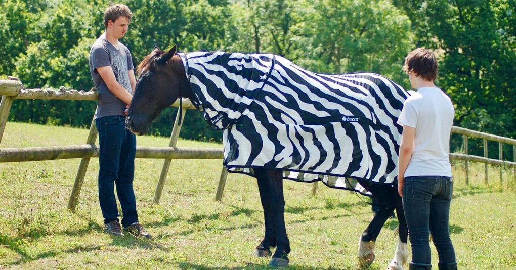 Британские учёные наконец-то выяснили, зачем зебре полоски. Для этого им пришлось нарядить лошадей