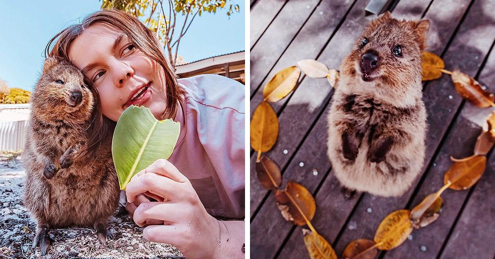 15 снимков жизнерадостных квокк от фотографа из Москвы, которая лишь ради них прилетела в Австралию