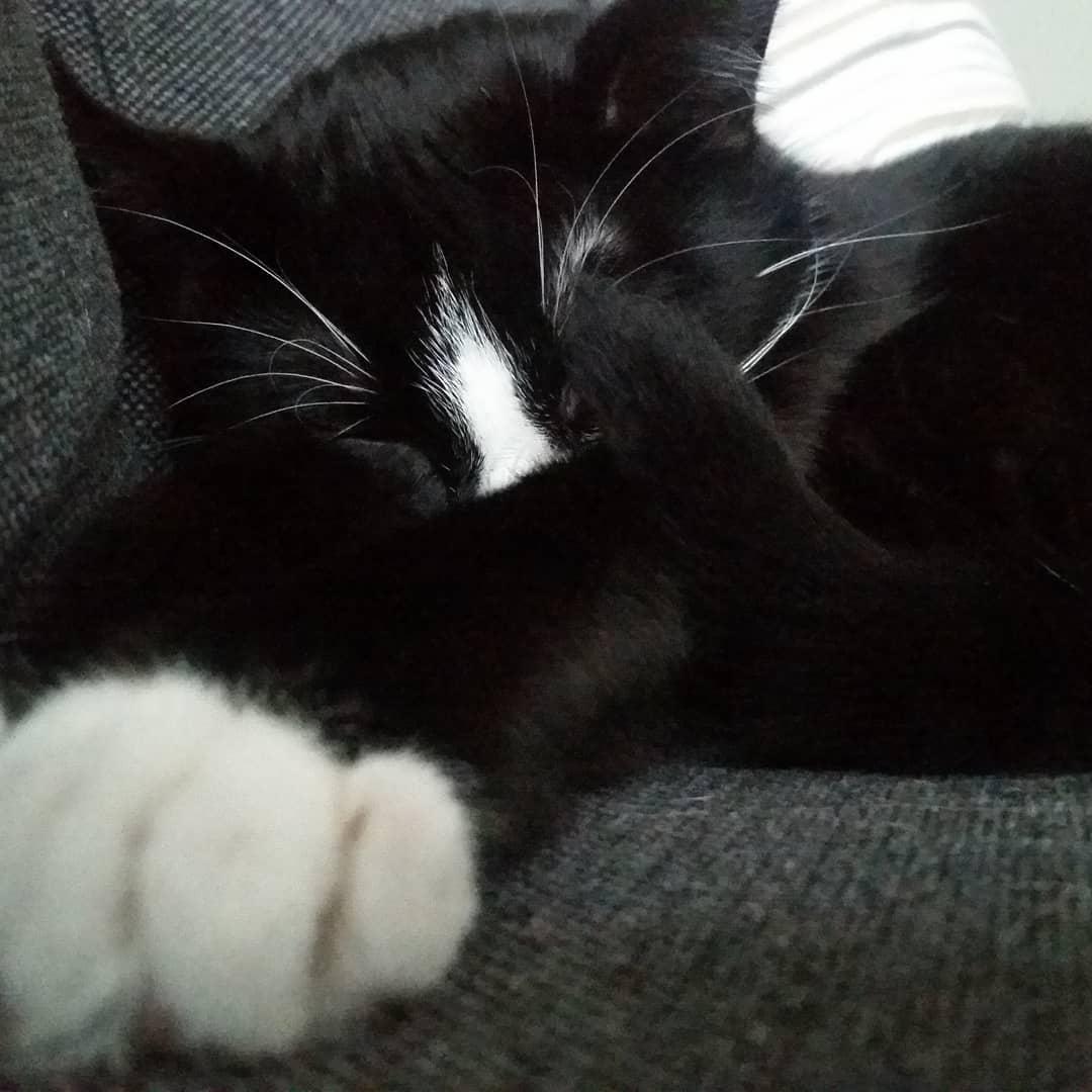 50115172 830063640667879 3644246353464302842 n - Немка нашла двух чёрно-белых кошек и взяла их себе. Но через пару месяцев одна из них начала белеть