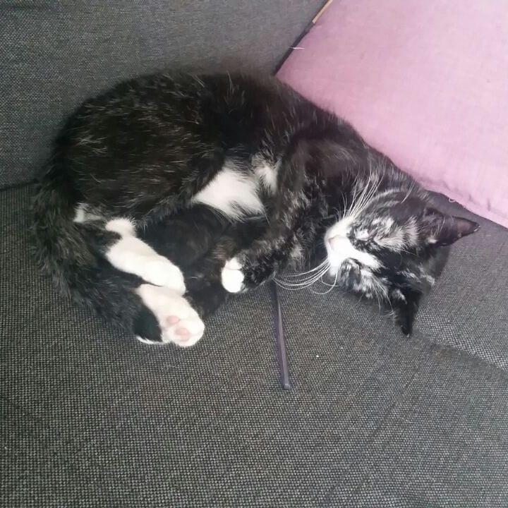 50273064 104610020662552 4096466695661495841 n - Немка нашла двух чёрно-белых кошек и взяла их себе. Но через пару месяцев одна из них начала белеть