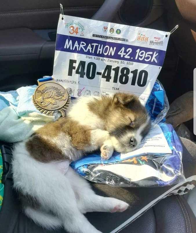 50560807 2497327096949042 130185019997028352 n - Участница марафона подобрала щенка на обочине и пробежала с ним ещё 30 километров до самого финиша
