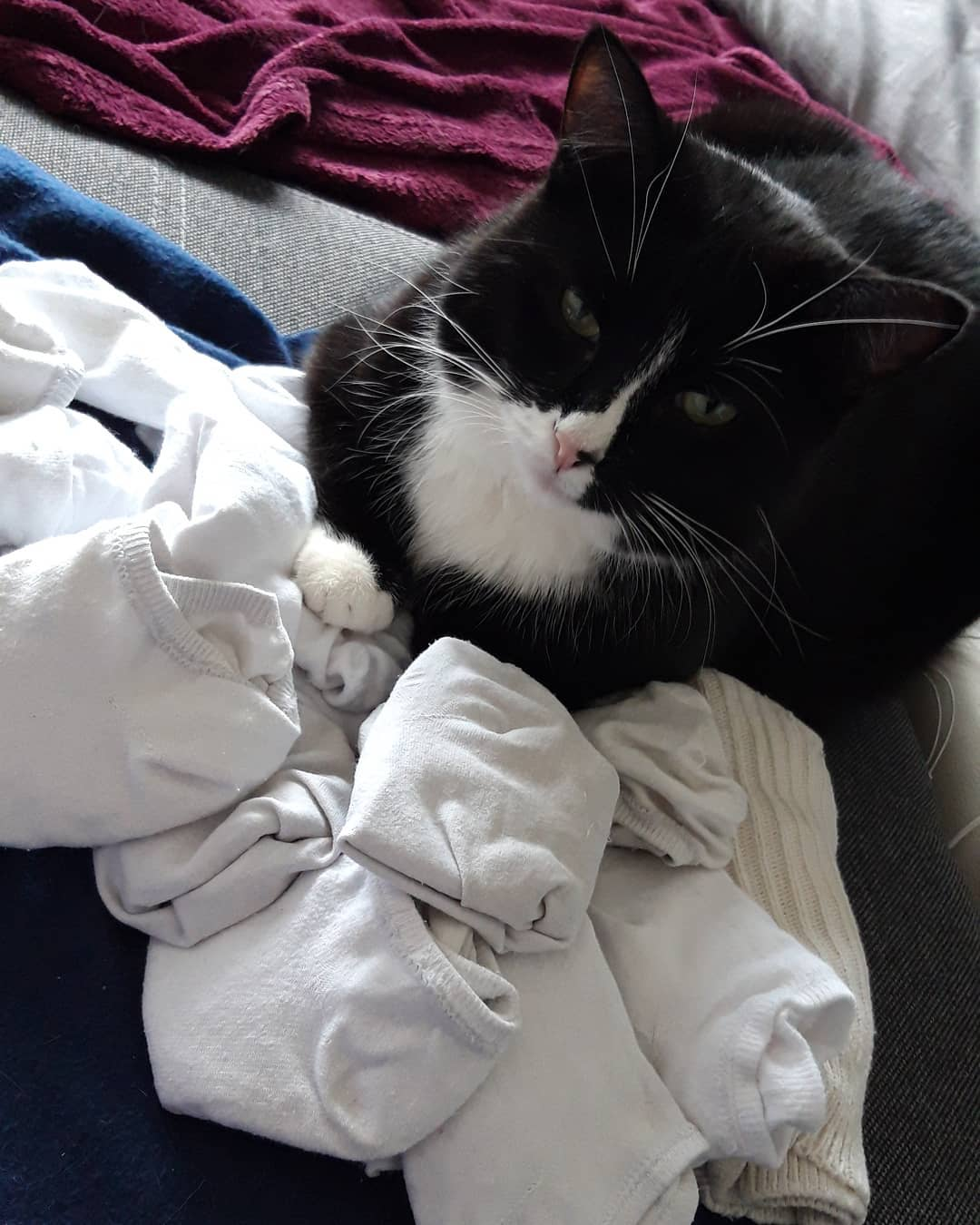 50574473 2281100455502841 2404246022008408151 n - Немка нашла двух чёрно-белых кошек и взяла их себе. Но через пару месяцев одна из них начала белеть