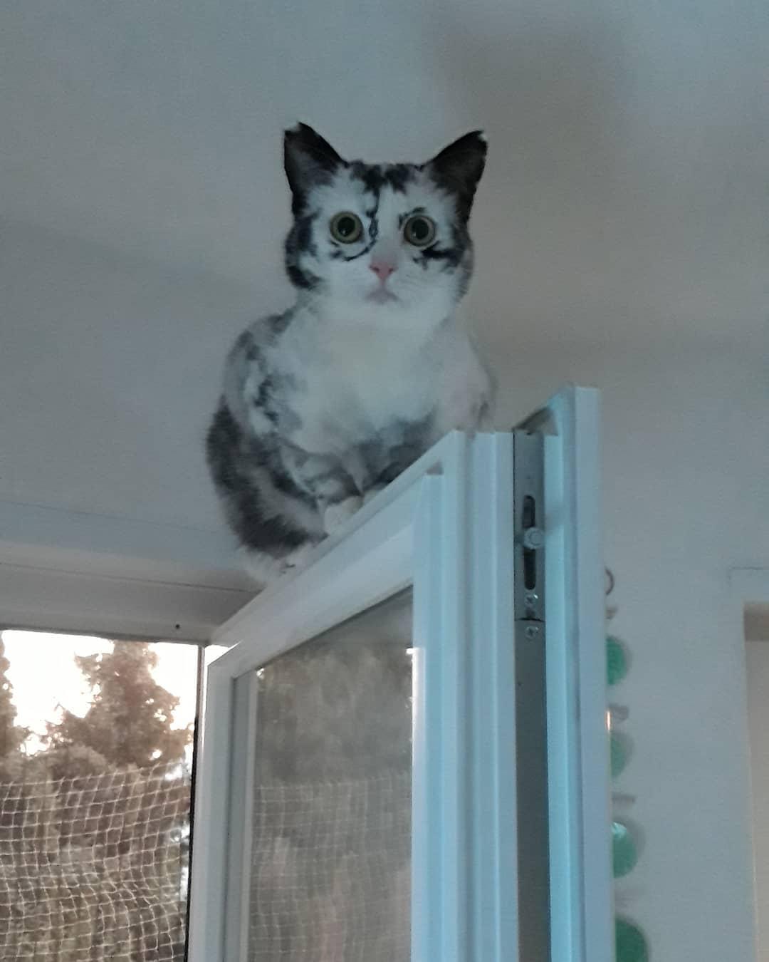 50767927 372553593583039 7851774774062190689 n - Немка нашла двух чёрно-белых кошек и взяла их себе. Но через пару месяцев одна из них начала белеть