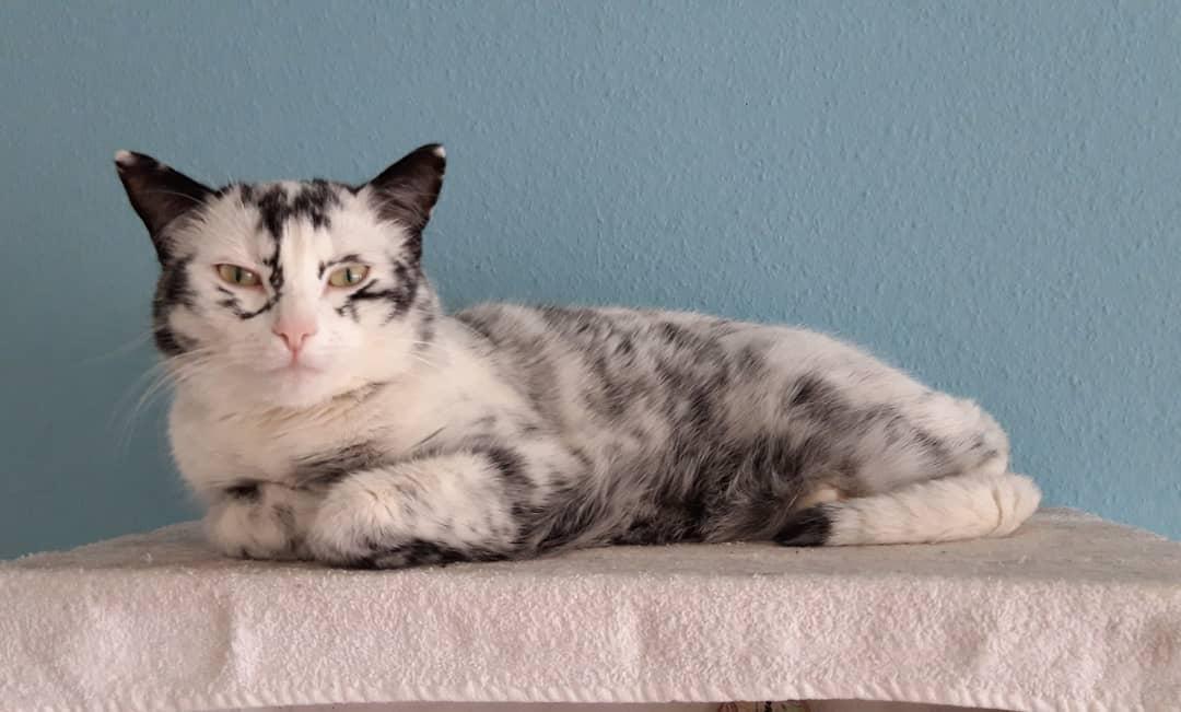 51211740 534309613725527 2060150134587638959 n - Немка нашла двух чёрно-белых кошек и взяла их себе. Но через пару месяцев одна из них начала белеть