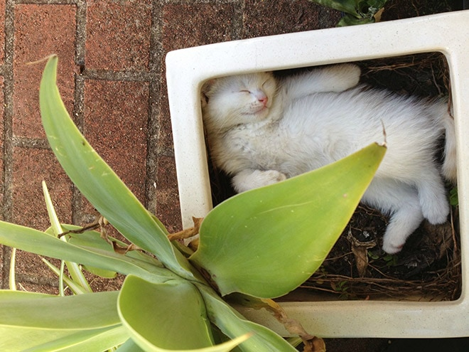 Kitten plant you probably shouldn