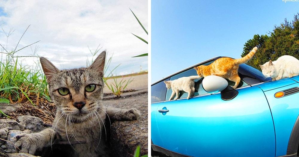 Японский фотограф делает снимки бродячих котов, чья жизнь — настоящий рок-н-ролл!