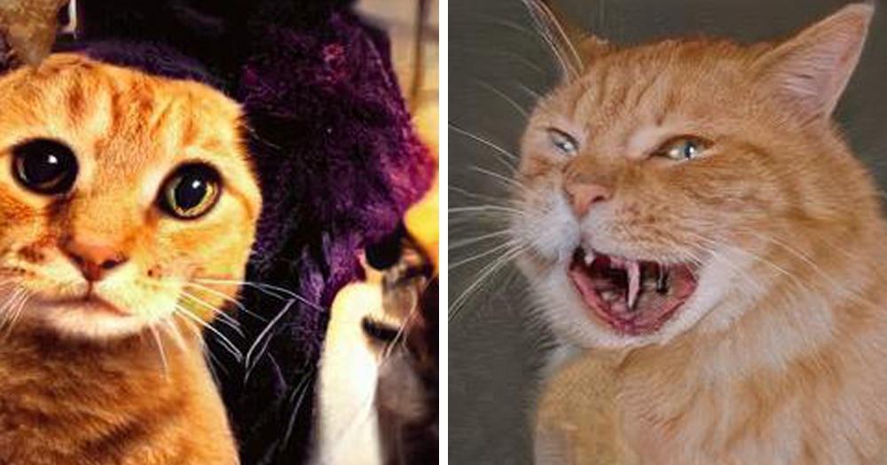В сети появился сайт, генерирующий несуществующих котов. Получаются монстры не для слабонервных