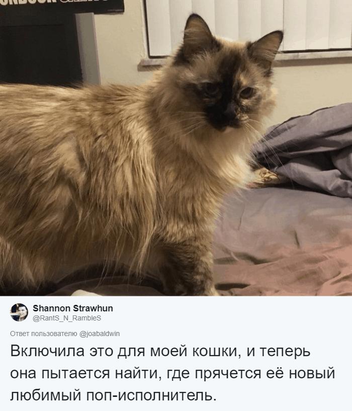 bez nazvaniya 14 10 - Хозяин обработал мяуканье своего кота, который орал всё утро. И этот трек грозится стать хитом