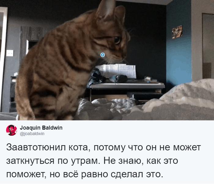 bez nazvaniya 5 12 - Хозяин обработал мяуканье своего кота, который орал всё утро. И этот трек грозится стать хитом