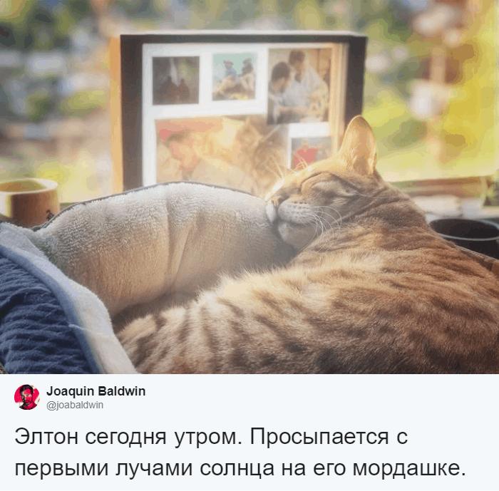 bez nazvaniya 7 12 - Хозяин обработал мяуканье своего кота, который орал всё утро. И этот трек грозится стать хитом