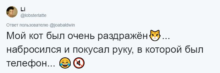 bez nazvaniya 8 12 - Хозяин обработал мяуканье своего кота, который орал всё утро. И этот трек грозится стать хитом
