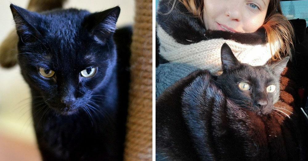 Хозяева нашли своего кота, но не были уверены, что это он. Определиться помогла его любовь к носкам
