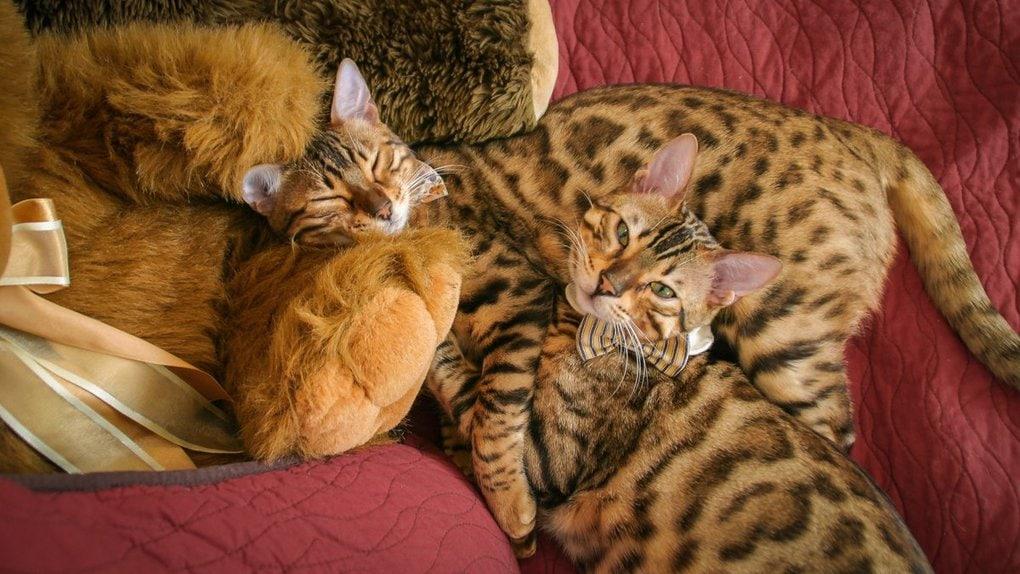 dztodnnu8aar dm - Хозяин обработал мяуканье своего кота, который орал всё утро. И этот трек грозится стать хитом
