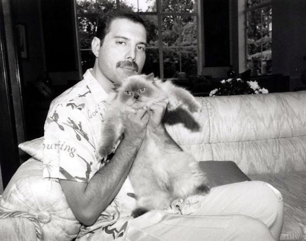 15 фотодоказательств того, что на свете есть один настоящий котолюб — и это Фредди Меркьюри 13