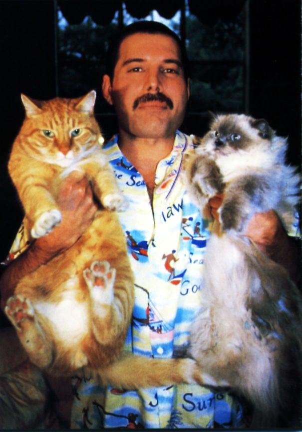 15 фотодоказательств того, что на свете есть один настоящий котолюб — и это Фредди Меркьюри 8