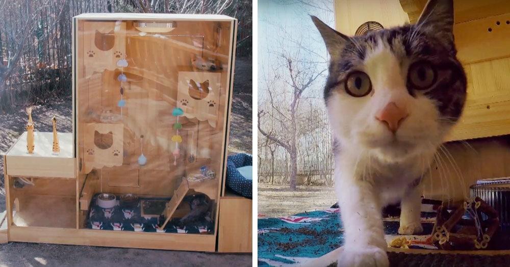Инженер из Пекина построил кошачий приют, в котором работают не люди, а искусственный интеллект