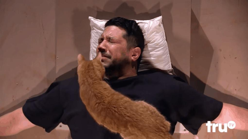 screenshot 6 - Этот мужчина впадает в панику при виде котиков, и друзья решили устроить ему милейшую пушистую пытку