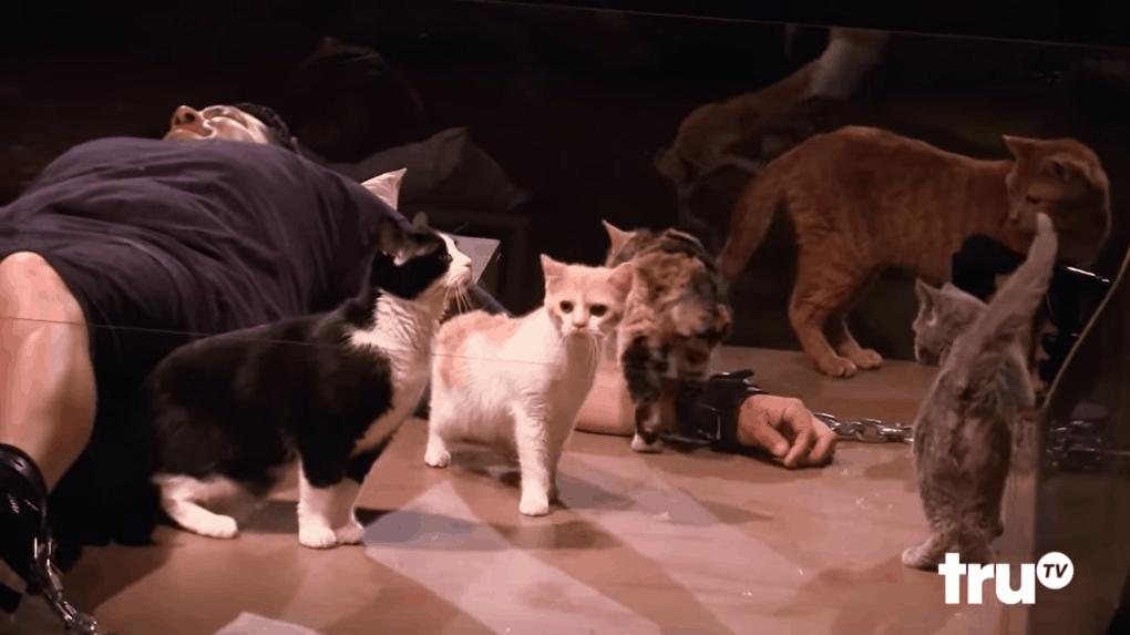 screenshot 7 - Этот мужчина впадает в панику при виде котиков, и друзья решили устроить ему милейшую пушистую пытку
