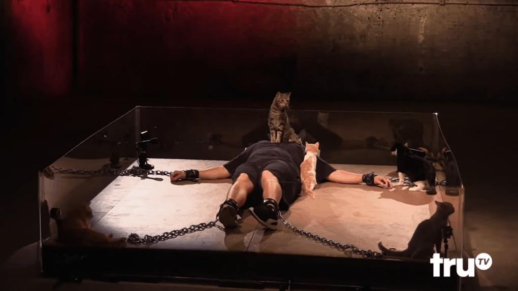 screenshot 8 - Этот мужчина впадает в панику при виде котиков, и друзья решили устроить ему милейшую пушистую пытку