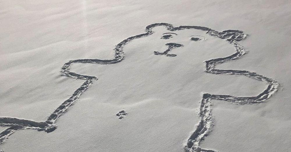 Канадка нашла нарисованного на снегу медведя, и теперь все пытаются понять: как ему сделали пупок?