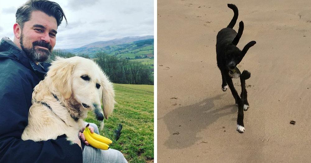 20 панорамных фотографий, на которых собаки превратились в инопланетных монстров