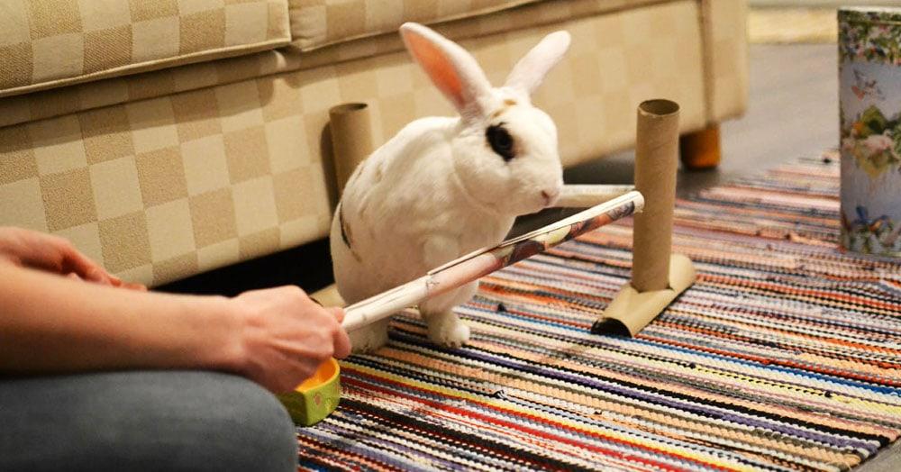 Домашний кролик из Финляндии попал в Книгу рекордов Гиннеса. Он выполняет 20 трюков в минуту