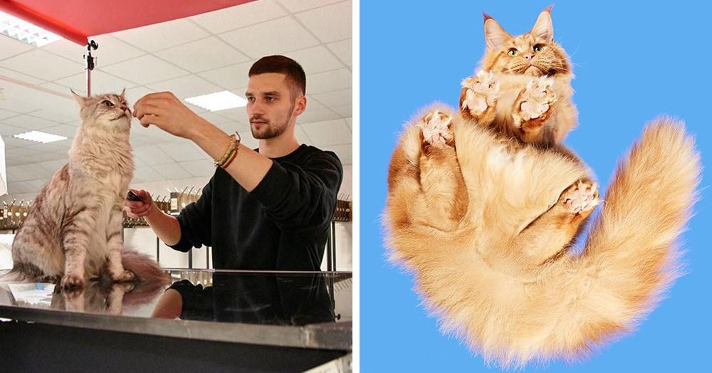 «Взгляд снизу»: фотограф из Литвы создал необычный проект, вдохновившись котами на стеклянных столах