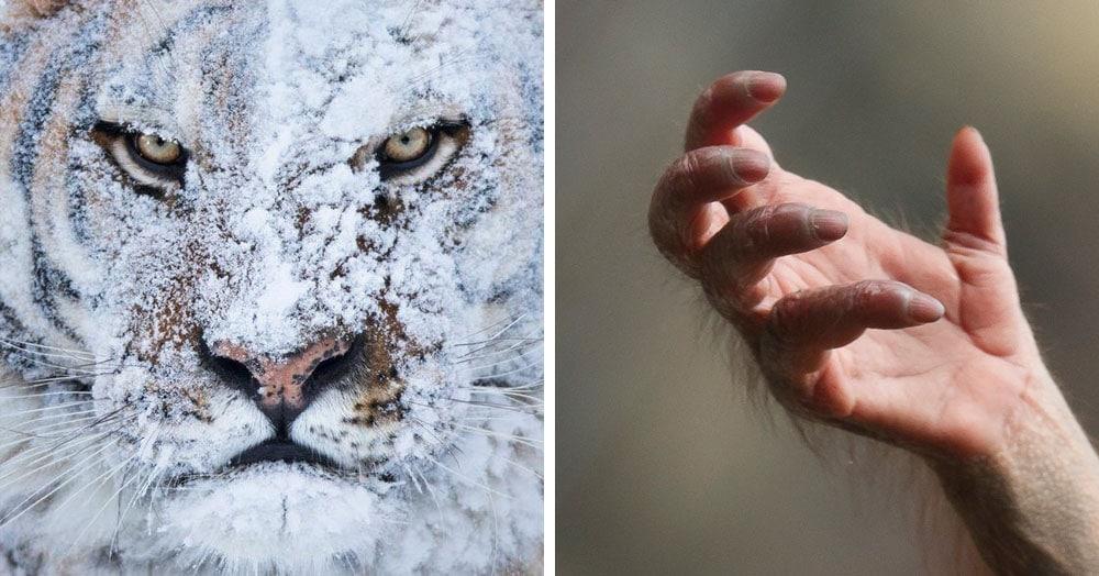 15 фотографий животных, которые хоть и красивые, но тискать их не хочется ни за какие коврижки