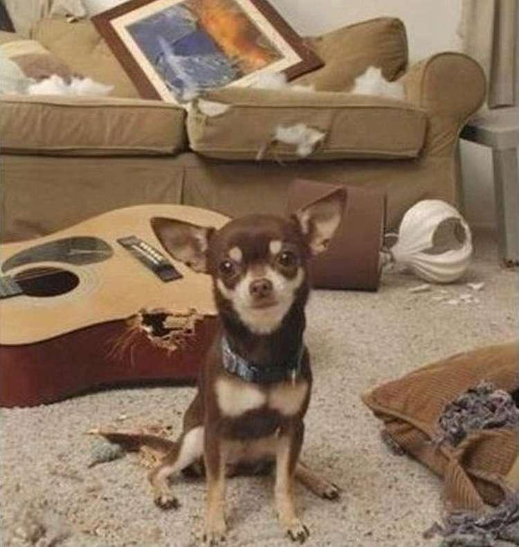 Картинки по запросу se regala perro meme