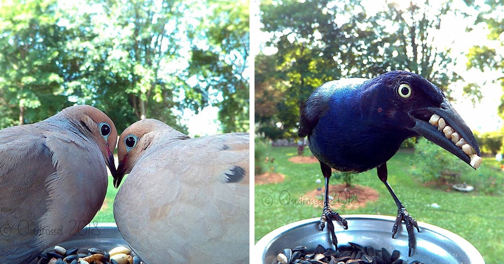 Девушка установила камеру на птичью кормушку и подловила пернатых в самые неожиданные моменты