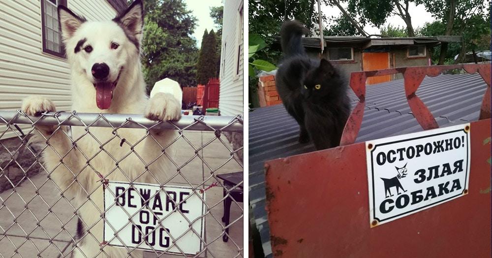 17 случаев, когда за табличкой «Осторожно, злая собака» скрывалось вовсе не то, чего стоило ожидать