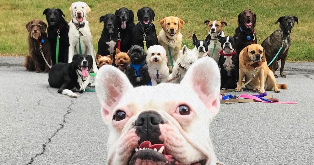 Нью-Йоркская организация по выгулу собак делает крутейшие псовые селфи, и их Инстаграм фееричен!