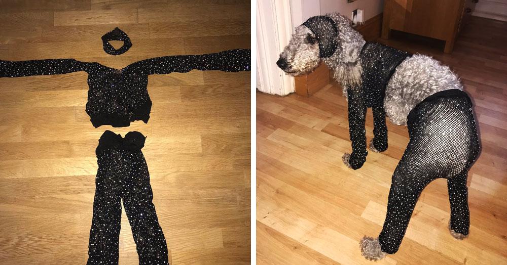 Девушка заказала в интернет-магазине сетчатый костюм своего размера, но он подошёл только её собаке
