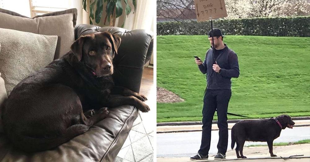 Парень не смог вернуть лабрадоршу-потеряшку через соцсети, и вышел на улицу с собакой и табличкой