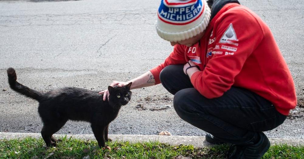 «Кладбище домашних животных» в реальном мире: парень похоронил кота, а утром тот вернулся домой