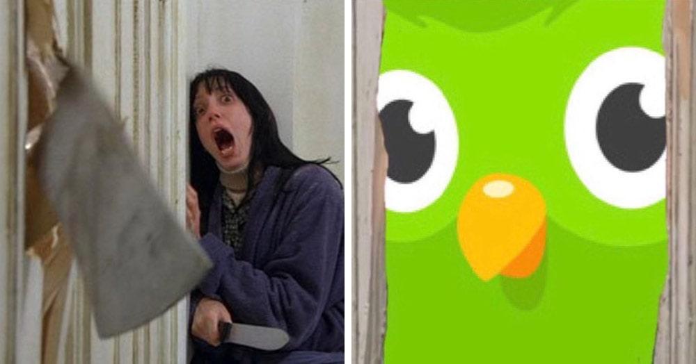 Сервис по изучению языков Duolingo стал новым мемом. О чём он, и чем опасна эта зелёная сова?