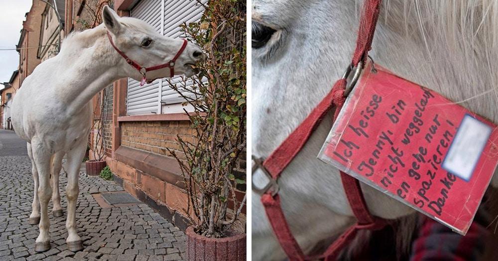 Во Франкфурте живёт лошадь, которая уже 14 лет каждое утро выходит на прогулку в полном одиночестве