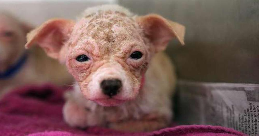 На эту собачку было сложно взглянуть без слёз. Но любовь и забота превратили её в настоящую милашку