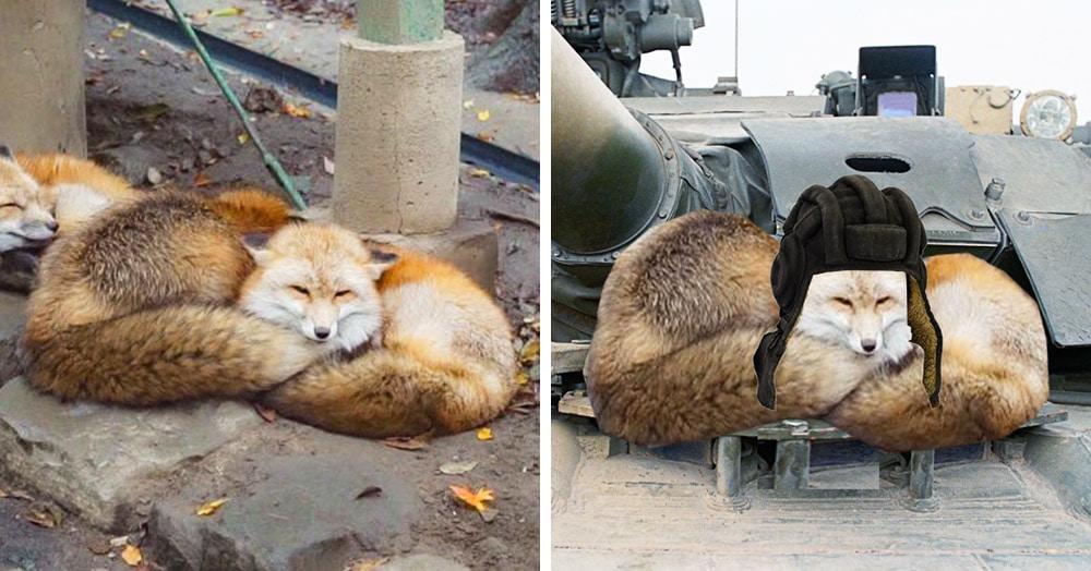 Лисёнок прилёг на другого лисёнка, но в сети его приняли за качка с огромными бицухами. И понеслось!
