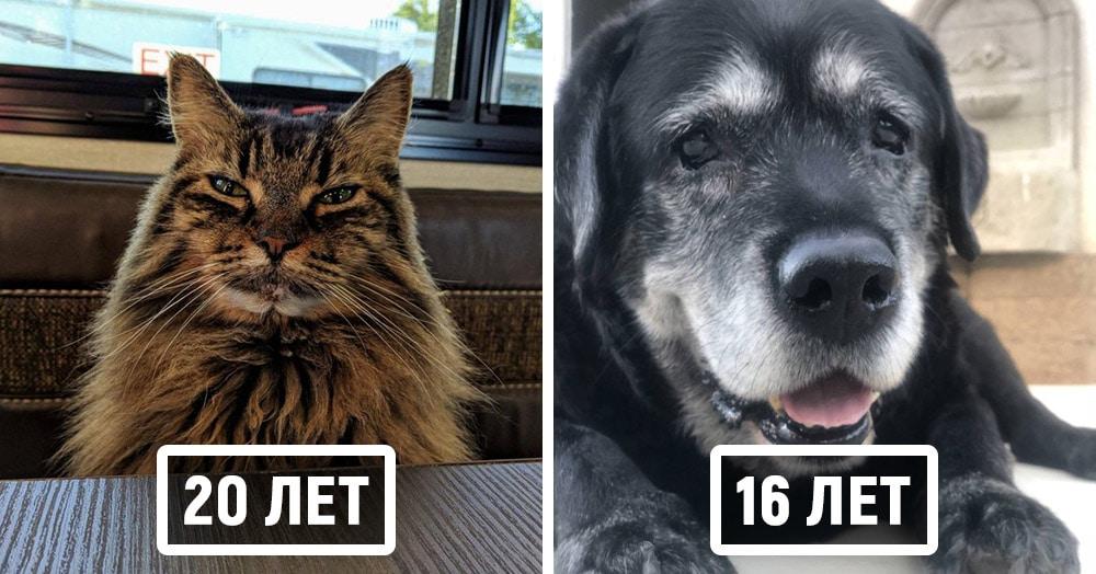 20 домашних животных-пенсионеров, которые с возрастом не потеряли своего великолепия