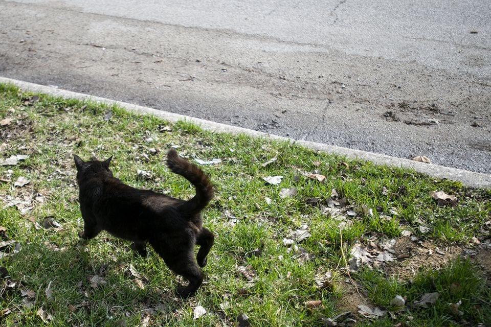 2ynyal66ujbyfp4wy4ems3tfcq - «Кладбище домашних животных» в реальном мире: парень похоронил кота, а утром тот вернулся домой