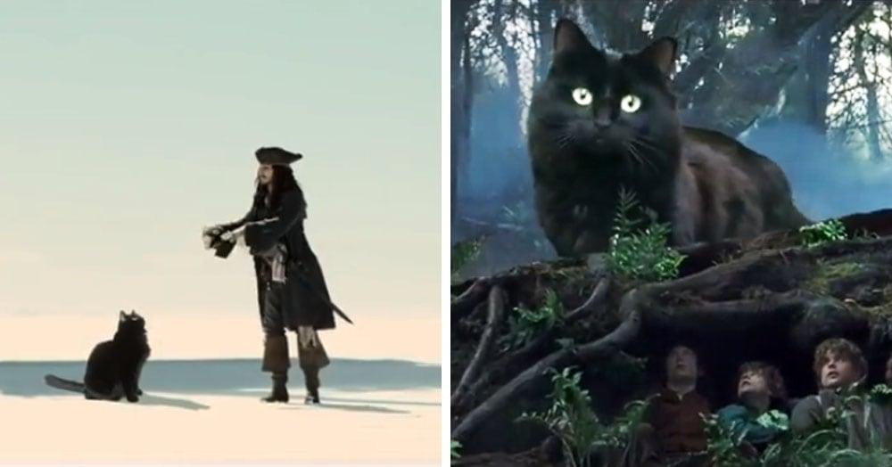 Монтажёр добавляет свою кошку в сцены из культовых фильмов, и она превращает любые сюжеты в комедии