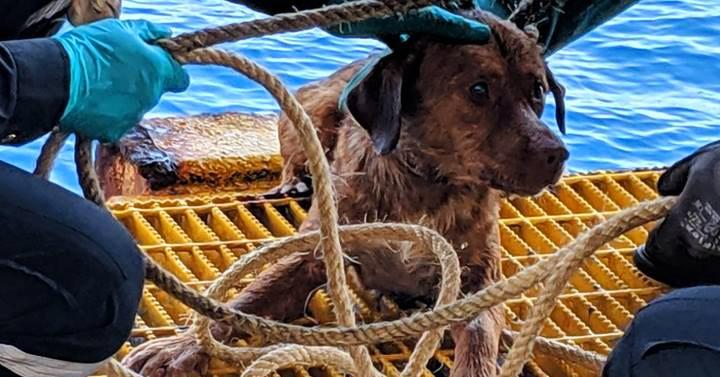 В Южно-Китайском море спасли собаку, оказавшуюся в 217 км от берега. Но она и сама не сплоховала