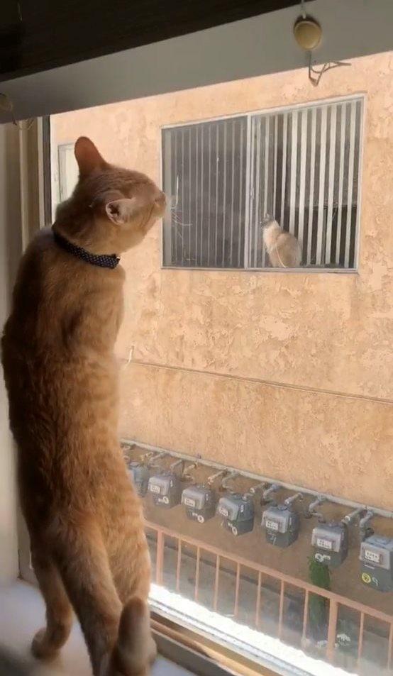d4y84ngwaaik7ua - Кот нашёл себе нового друга, но они не могли познакомиться поближе. Тогда хозяйка решила им помочь