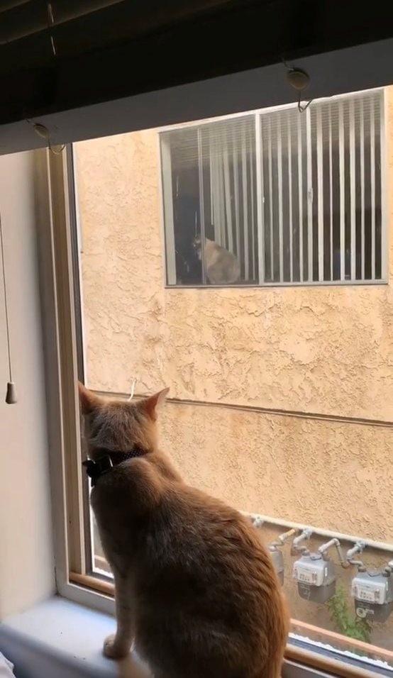 d4y84ngx4aa7xjt - Кот нашёл себе нового друга, но они не могли познакомиться поближе. Тогда хозяйка решила им помочь