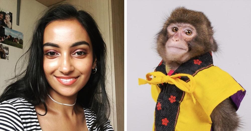 Девушка нашла фотографию обезьяны, которая похожа на всех журналистов мира. И они это подтверждают