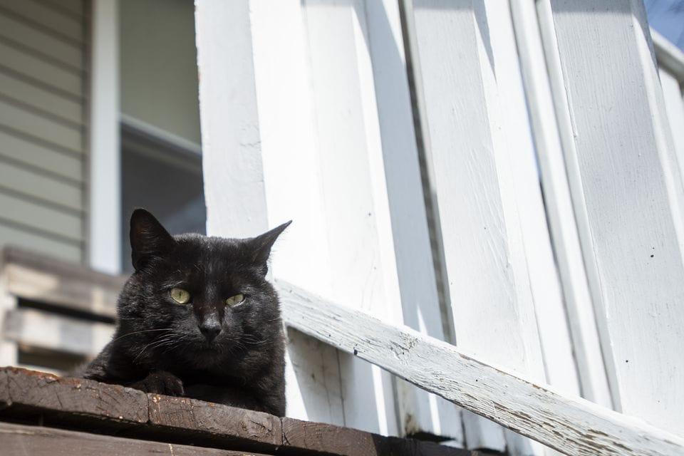jwdz3zzw4bbkbjw7umdssgscra - «Кладбище домашних животных» в реальном мире: парень похоронил кота, а утром тот вернулся домой