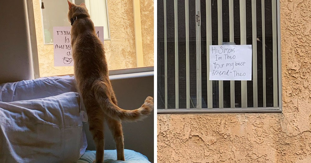 Кот нашёл себе нового друга, но они не могли познакомиться поближе. Тогда хозяйка решила им помочь