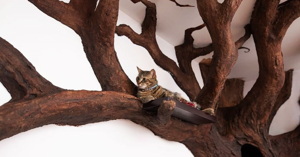 Мужчина создал в квартире друга огромное дерево. Кошачье сердечко было покорено моментально!