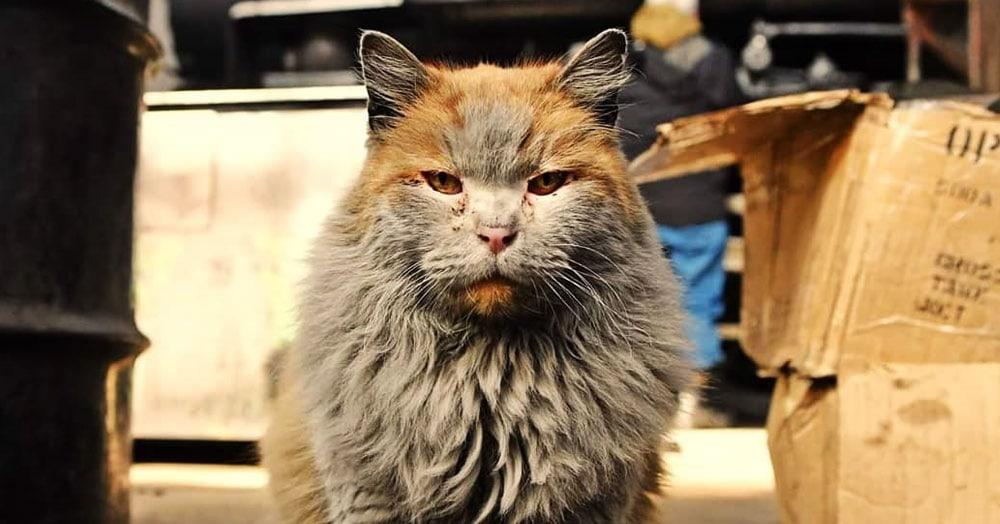 Эта кошка выглядит так, будто она валялась в пыли и ремонтировала поезда. Но это её природный цвет!